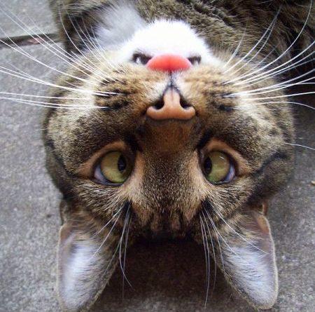 Angry Bunny - Cat humor
