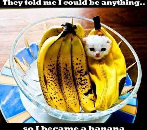 Banana cat - Cat humor