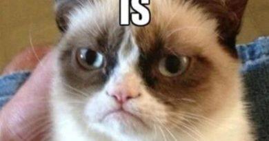 Grumpy Cat's Blood Type - Cat humor