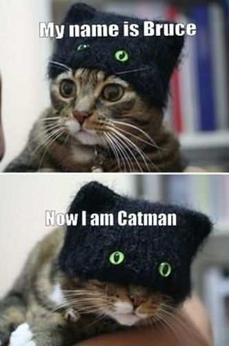 Catman - Cat humor