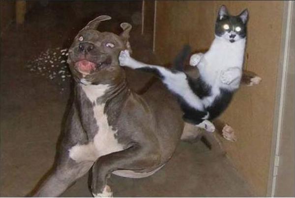 Cat Norris - Cat humor