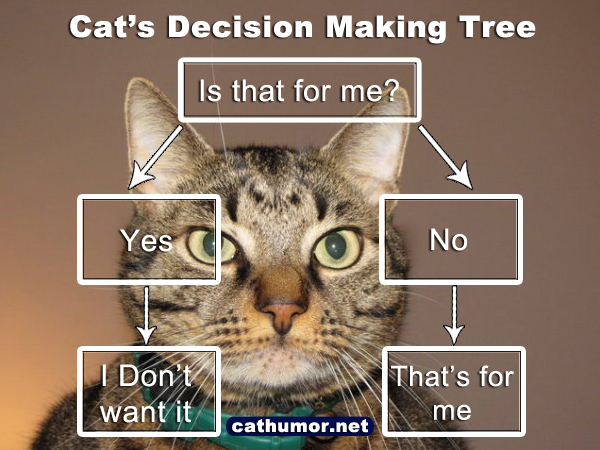 Cat's Decision Making Tree - Cat humor