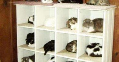 Cat Organizer - Cat humor