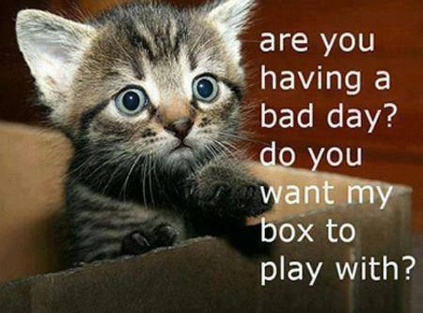 Are You Having A Bad Day? - Cat humor