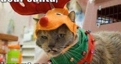Dear santa - Cat humor