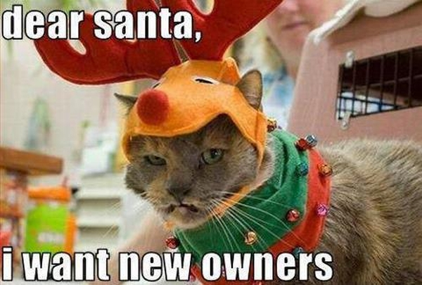 Christmas – Cat Humor