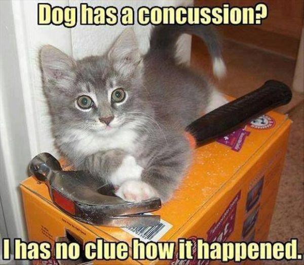 Dog Has a Concussion? - Cat humor