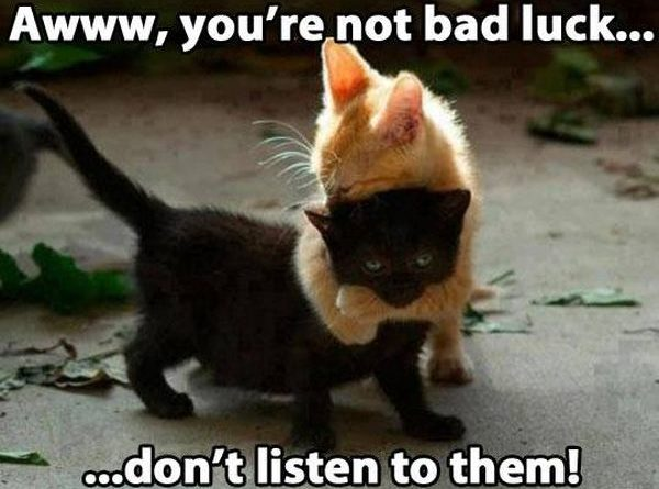 Don't Listen To Them - Cat humor
