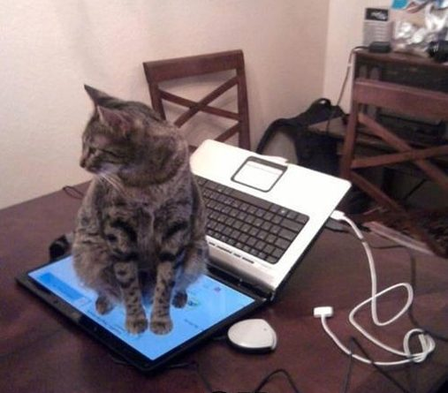 Dont sit on keyboard - Cat humor