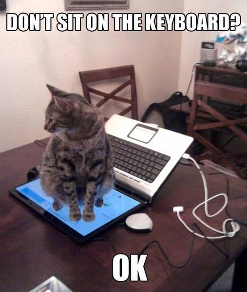 Don't sit on keyboard - Cat humor
