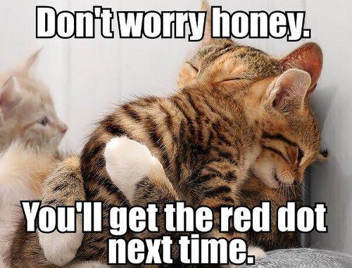 Don't Worry Honey - Cat humor