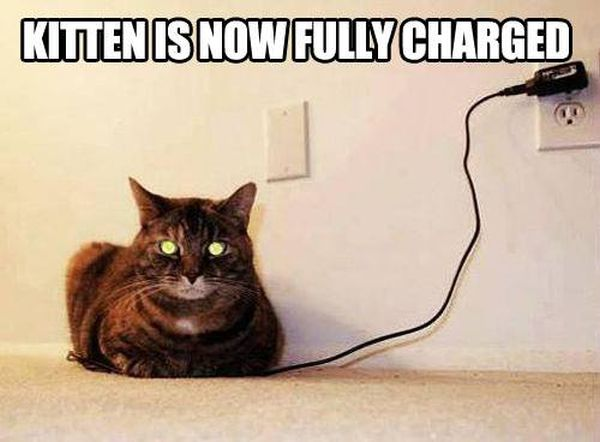 Fully Charged Kitten - Cat humor