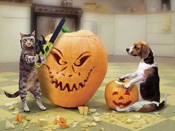 Getting ready for Halloween - Cat humor