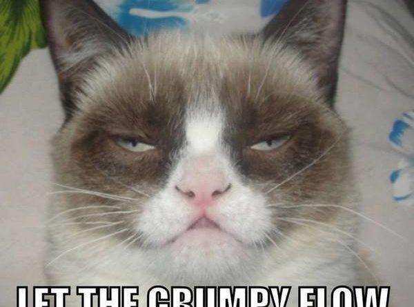Satisfied Grumpy cat - Cat humor