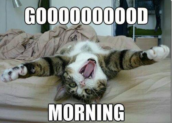 Good morning - Cat humor