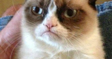 Grumpy cat watched vampire movie once - Cat humor