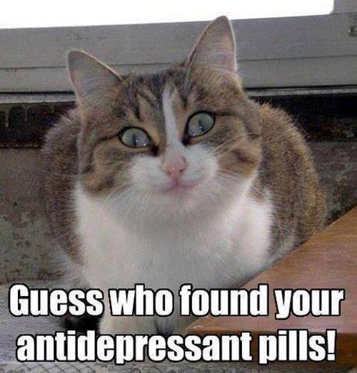 Guess what - Cat humor