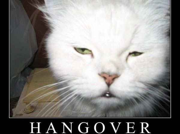 Hangover cats - Cat humor