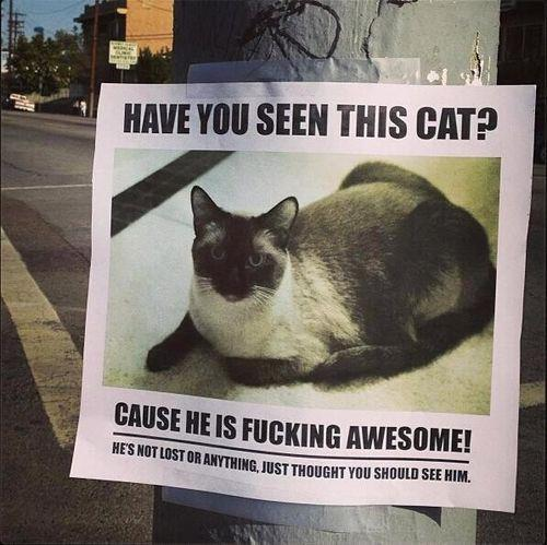 Have You Seen This Cat? - Cat humor