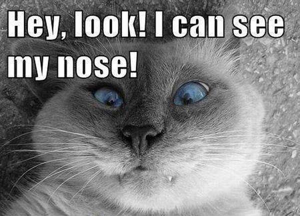 Hey look - Cat humor