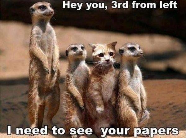 Hey you - Cat humor