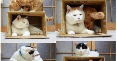 How To Catch A Cat - Cat humor