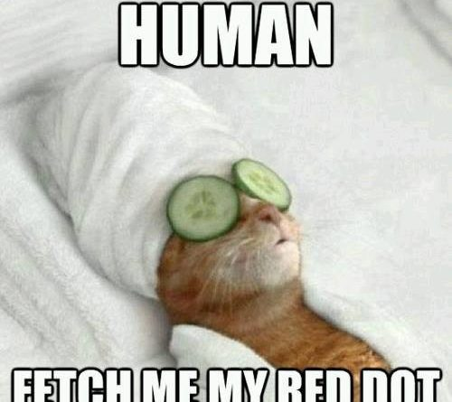 Obey - Cat humor