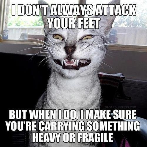 I Don't Always Attack Your Feet - Cat humor