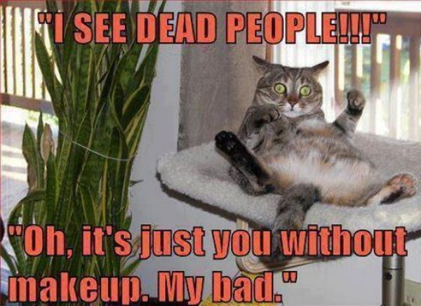 I See Dead People - Cat humor