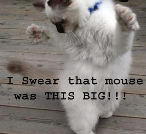 I Swear - Cat humor