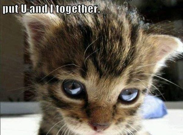 Kitten Love - Cat humor