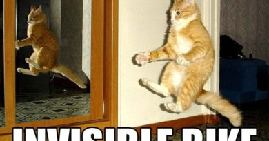 Invisible Bike - Cat humor