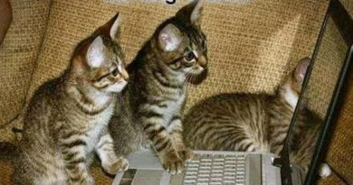 Just One More Click - Cat humor