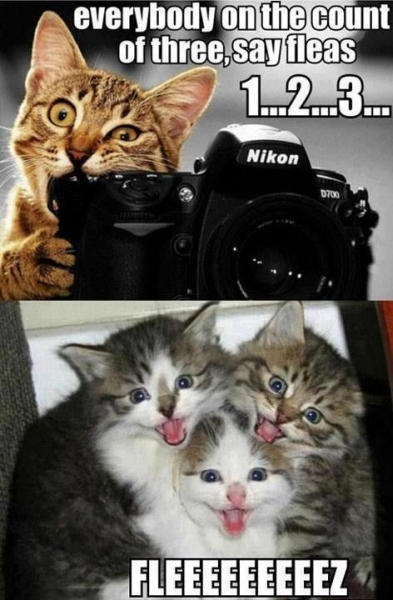 Say Fleas - Cat humor