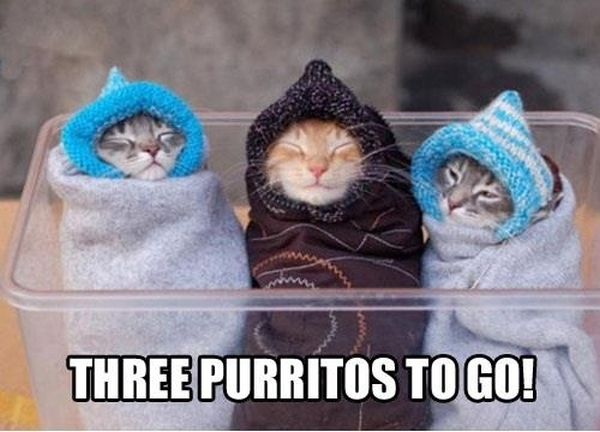 Three Purritos - Cat humor