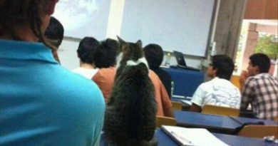 Lecture 1 - World Domination - Cat humor