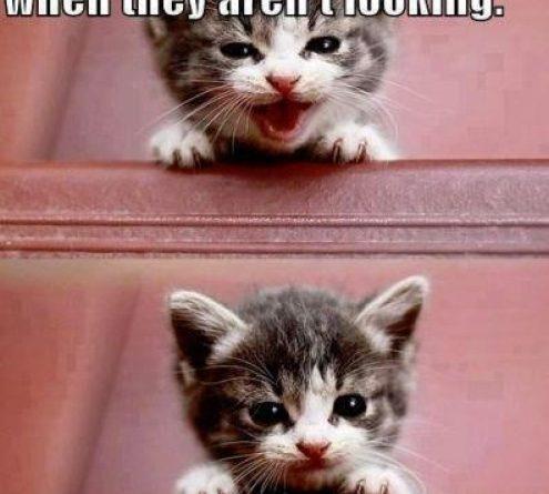 Making Faces - Cat humor