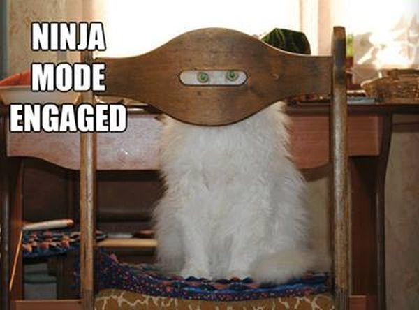 Ninja Mode Engaged - Cat humor