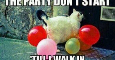 Party Cat - Cat humor