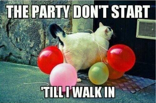Party Cat - Cat humor
