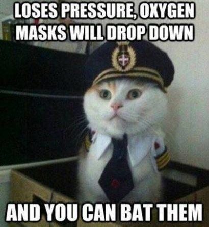 Dear Passengers - Cat humor