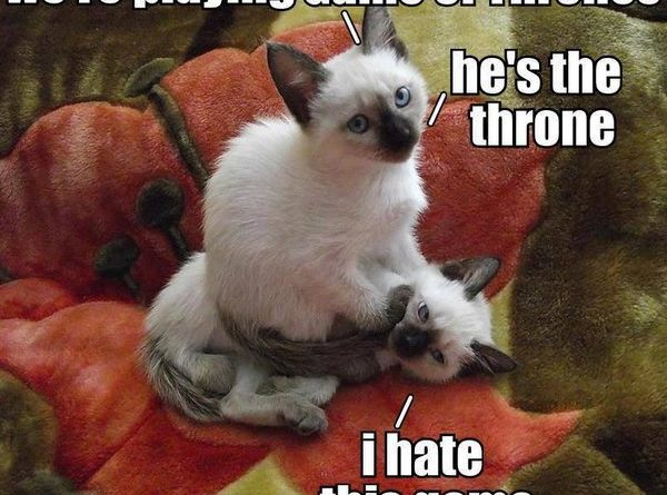 We're Playing Game Of Thrones - Cat humor