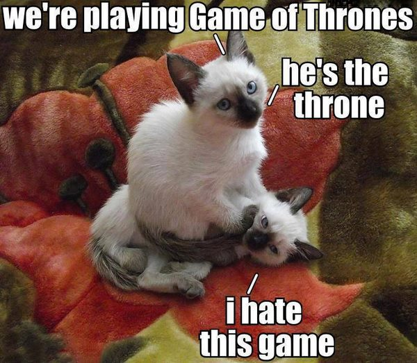 cat-humor-funny-playing-game-of-thrones-