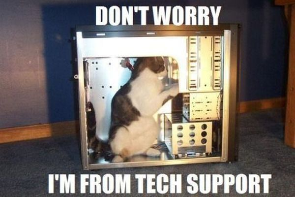 Don't Worry - Cat humor