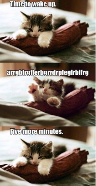 Time To Wake Up - Cat humor
