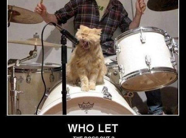Who Let The Dogs Out - Cat humor