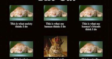 The Cat - Cat humor