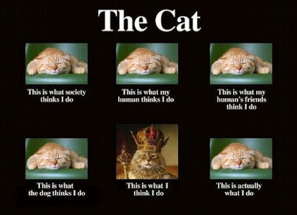 The Cat - Cat humor