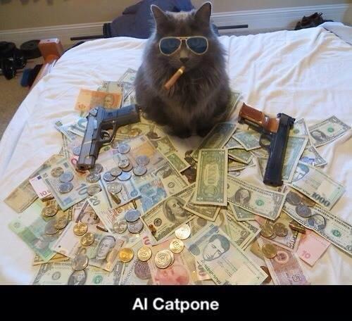 Al Catpone - Cat humor