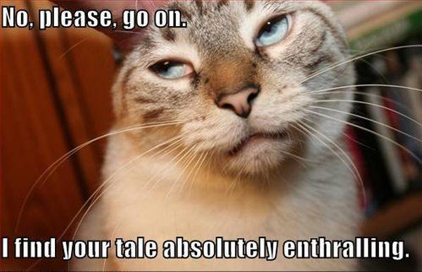Please, go on - Cat humor